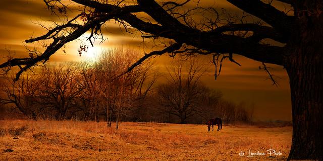 Evening Sun # 184