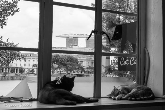 Cat cafe-10