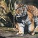 Dragan, Zoo Eberswalde by teekay72