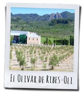 De olijfgaarden van Ribes-Oli in de Comunidad Valenciana