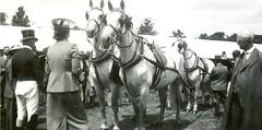 windsor royal show  july 1939
