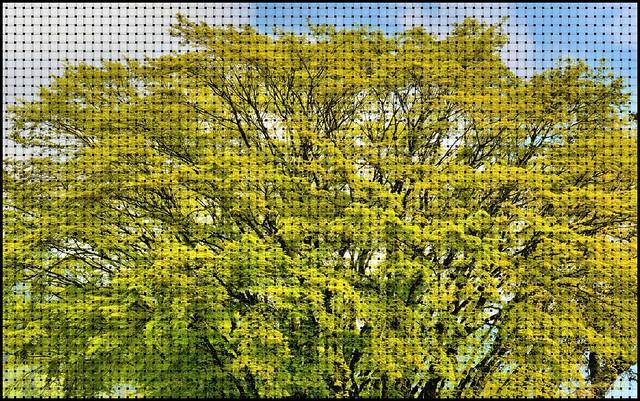 05-03-2015-Art of Nature