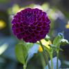 Botanic Gardnes-062