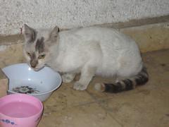 cat 2015-2