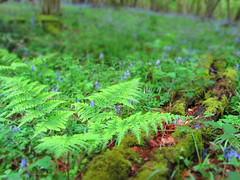 rainforest, flower, leaf, plant, green, forest, natural environment, ferns and horsetails, jungle, biome, vegetation, moss,