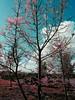 The way Japan is pictured in my HEAD ❤ Colorsplash Selective Color Autumn Colors Colors Of Autumn Autumn Collection Urban Landscape Nature Picsart