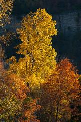Fall colours below Dundas Peak
