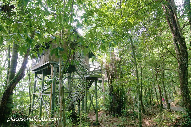 permai rainforest treehouse