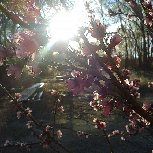 springtime. #nofilter