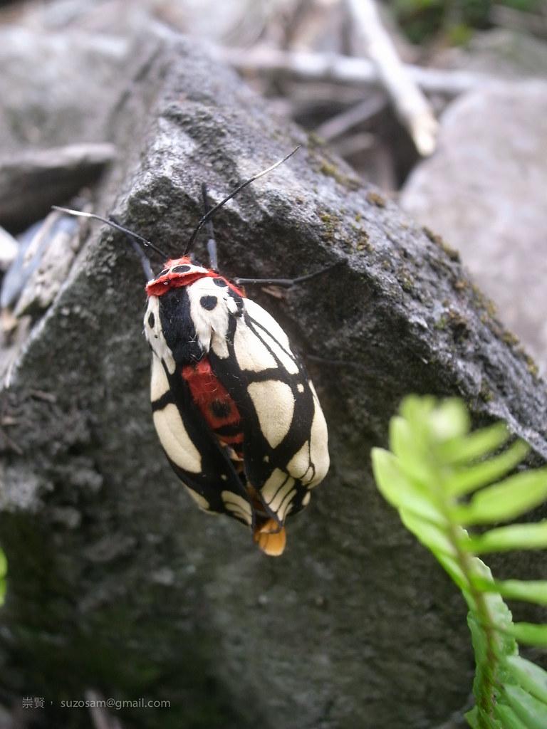 背水上營地途中,一隻一隻叫不出名的蟲