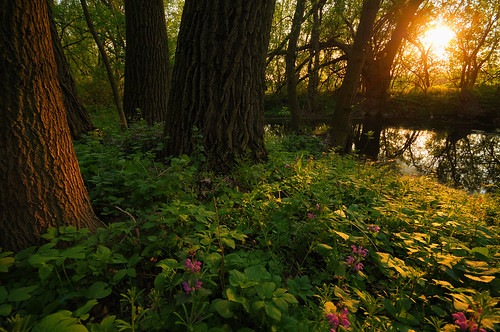light sunset sun flower tree water forest reflections woods colorful stream exposure wide illumination sigma hdr