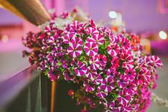 City Flowers #203/365