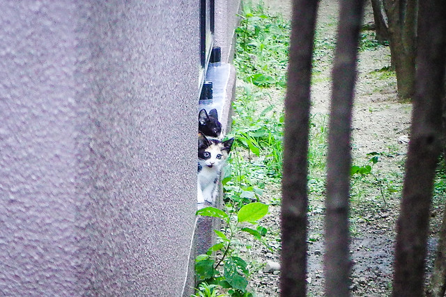 Today's Cat@2016-07-19