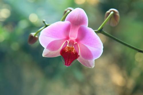 orchid flower beautiful sunrise landscape graceful elegance chineseculture nobility dorameulman