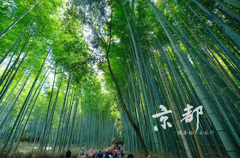 京都 嵐山竹林