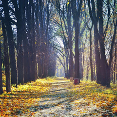 Beautiful autumn in forest. Nature trees  sunlight backgrounds