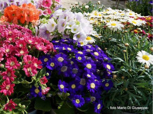 primavera-in-fiore