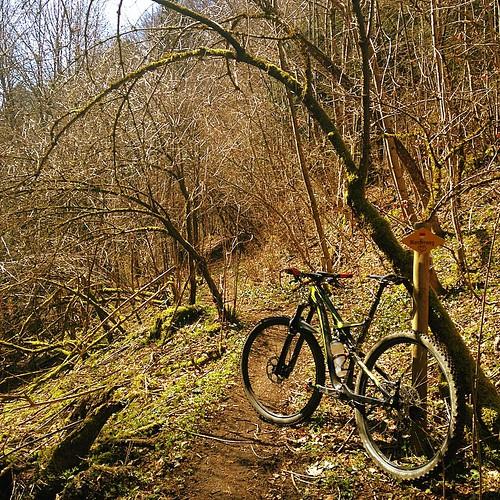 #mystictrail #stravaphoto #strava #stravaadventure #winterpokal #sofabusters #iamspecialized #specialized #camber_expert_evo #mountainbiking #mtb #vtt #sonnepur #perfektesbaselbiet