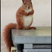 Have you seen my nuts....? by Siggi007