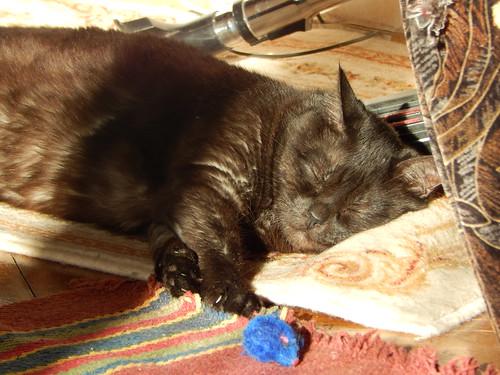 Муся спит на солнце