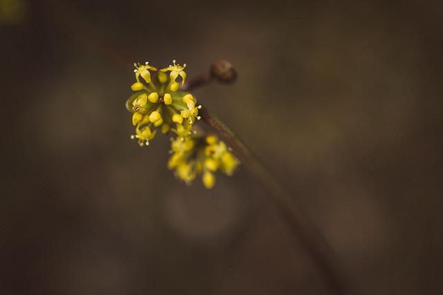 [359] Yellow blossom