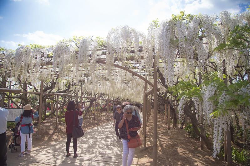 ashikaga_flowerpark-35