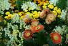 Gardening exhibition in Tokyo.
