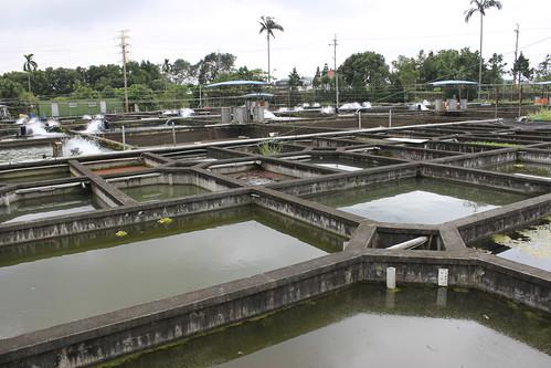 位於宜蘭員山鄉的八甲魚場保種池。(圖片攝影:羅聿)