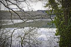 Lake & Trees