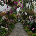 Orchid Show Morning View 3 by Eddie C3