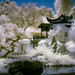 Serene Chinese Garden - Color IR by byron bauer