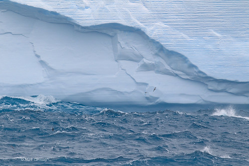 Iceberg and Petrels