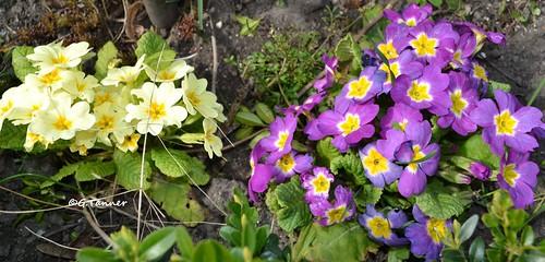 Mein Garten im April 2015