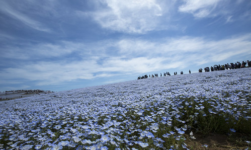 Hitachi Seaside Park : Japan_01