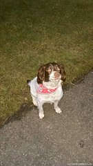 Mon, May 4th, 2015 Lost Female Dog - Drumboe Avenue, Ballybofey, Donegal