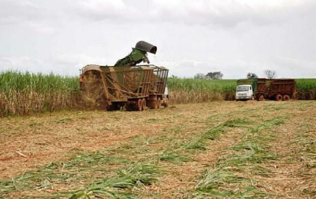 Agrotóxicos usados na monocultura da cana em SP elevam índices de adoecimento entre os agricultores e toda a população - Créditos: Arquivo Portal Brasil