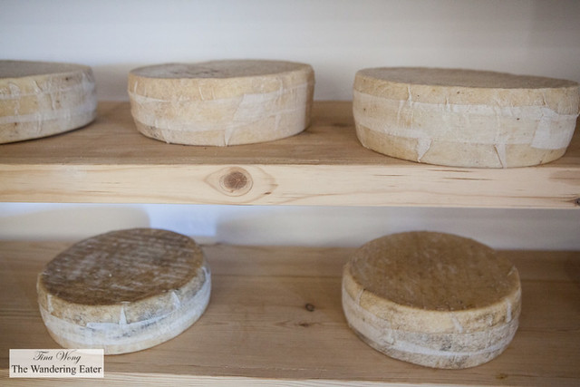Cheese maturing room for the terrior cheeses (a Parmesan-like Welsh cheese)