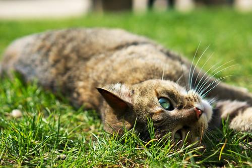 Le chat du Jardin Saint-Gilles - Grand-Veneur, Paris
