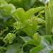 Fresh leaves, ferns unfurling by Monceau