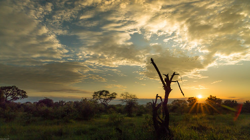 africa door sky clouds sunrise landscape southafrica sonnenuntergang outdoor dusk explore mornings landschaft krugernationalpark natue carlzeiss distagont2821 distagont2821zf2