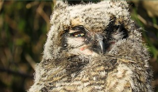 Private Ry-owl-an