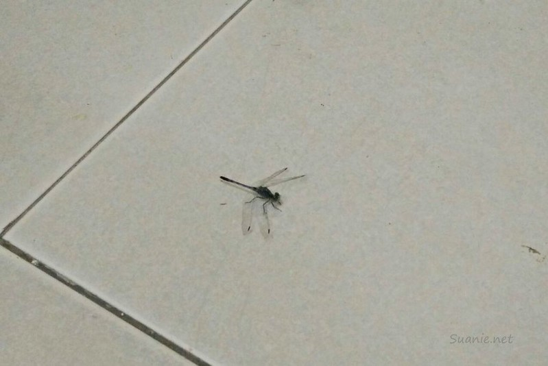 Dragonfly that came in with Grandfather's body