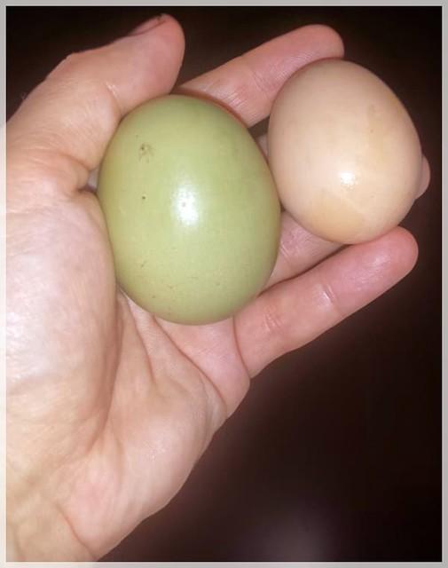 2 Eier von Haushühnern, on Flickr