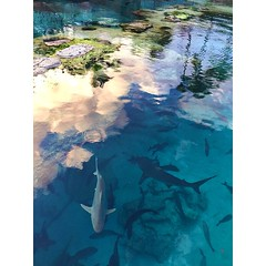 Sharks!  Playing with surface reflection, directional light, perspective, and finding just the right angle to capture the above and below environments.  #sharks #sharktank #environment #habitat #predators