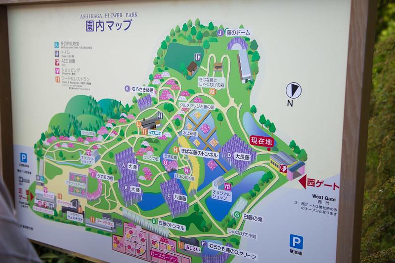 ashikaga_flowerpark-5