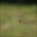 Little spider, big web by Gene Wilburn