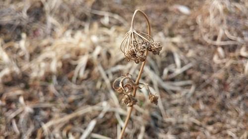 자연이 말린 들꽃 | 사상자