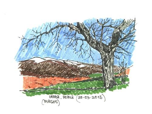 Roble melojo (Quercus pyrenaica) en Urrez (Burgos)