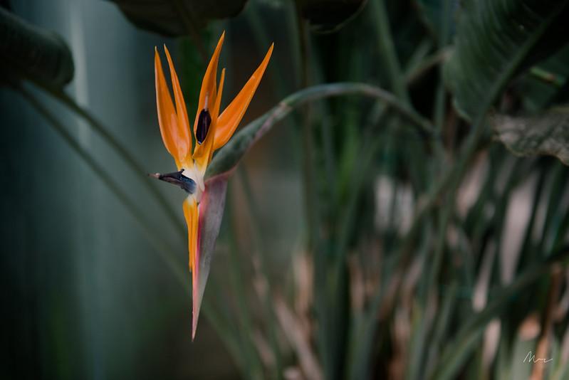 botanical garden tale