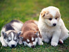 Cute Baby Puppies And Kittens Cool Backgrounds